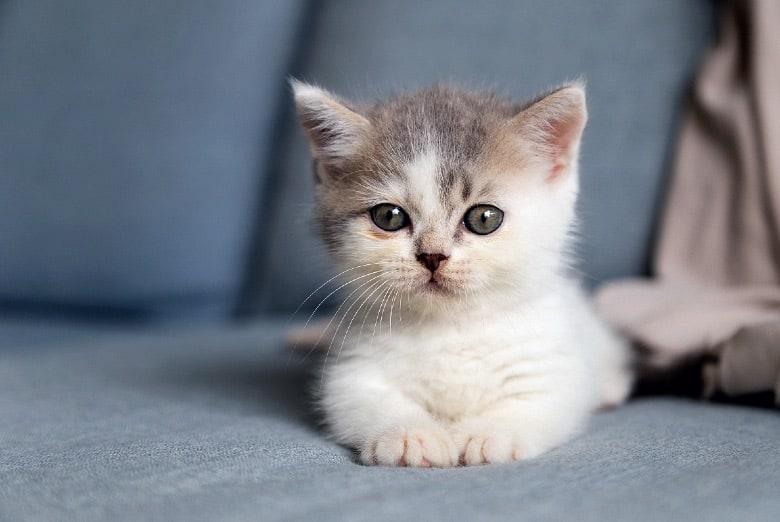 when do cats stop growing kitten