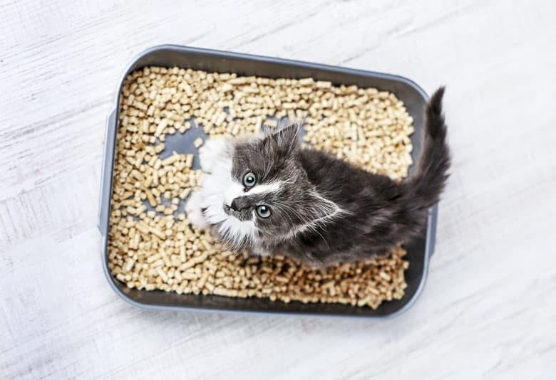 how often do cats pee kitten