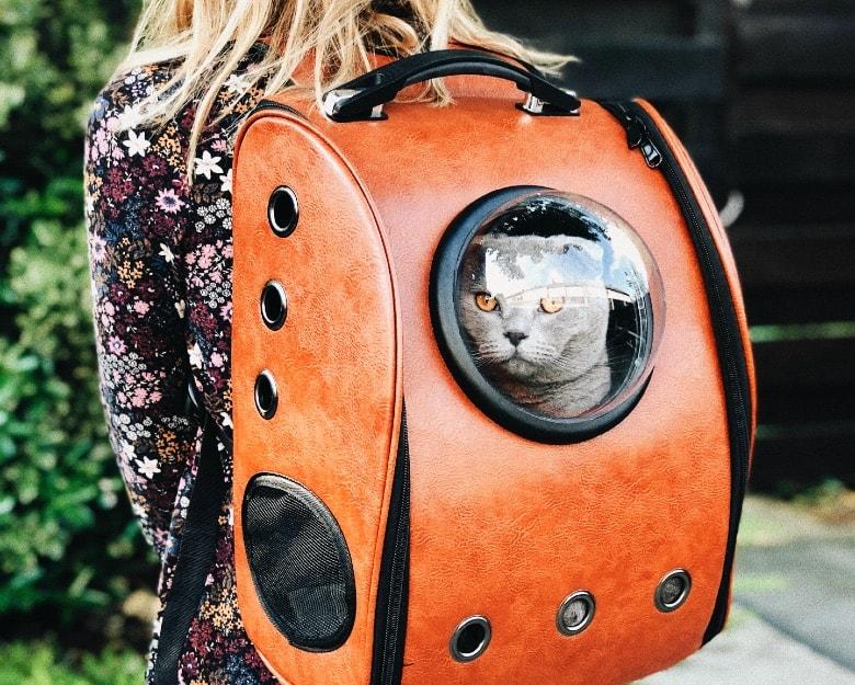 how often do cats pee travel