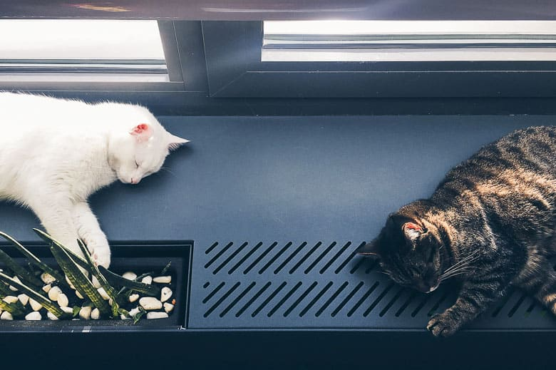 how to introduce two cats