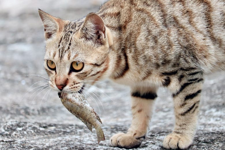 what is an obligate carnivore