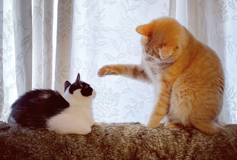 warning signs when introducing cats fighting