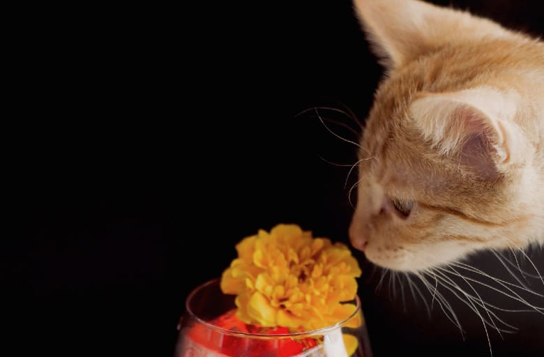 what smells do cats hate marigolds