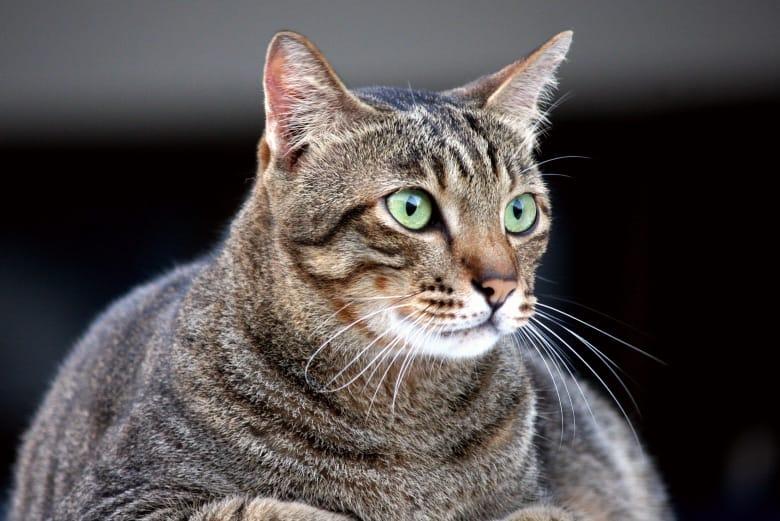 cat food ingredients to avoid carbs