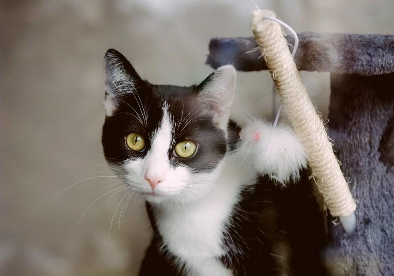 cat food ingredients to avoid fiber