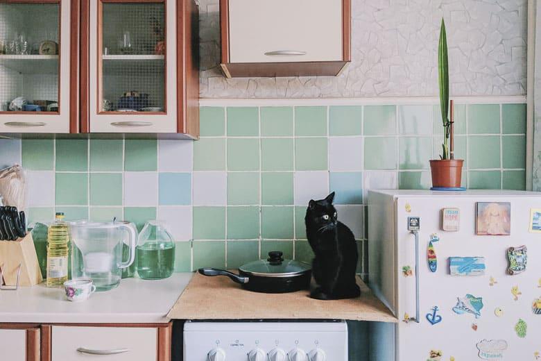 human grade cat food ingredients