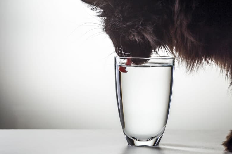 why do cats like milk water