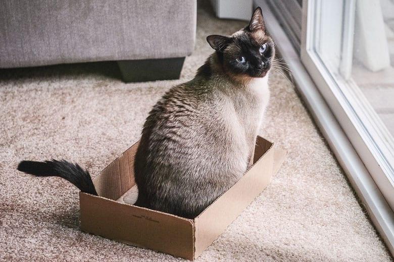 senior cats behavior