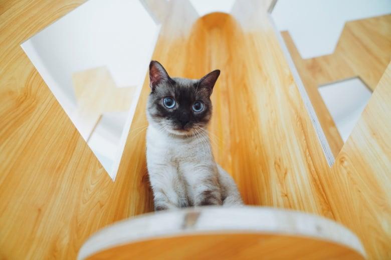 senior cats cat