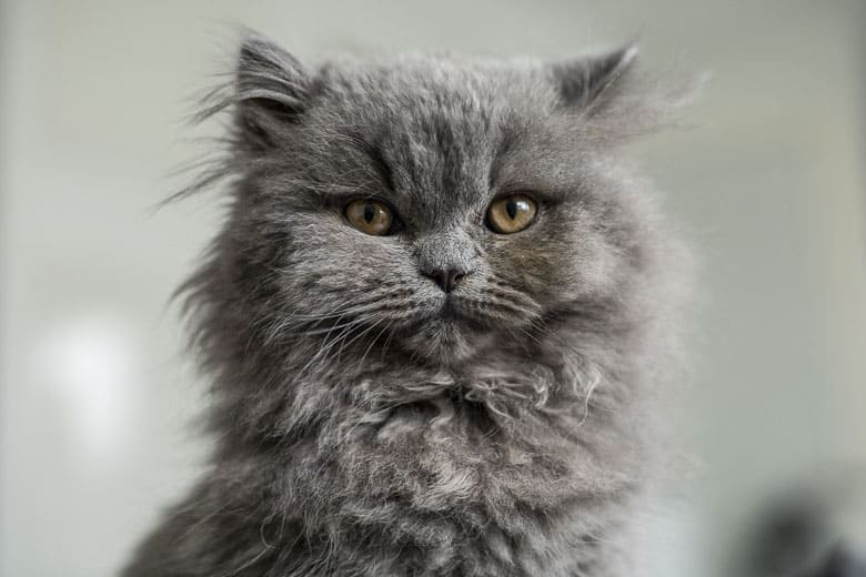 what is the best food for a cat with hyperthyroidism symptoms