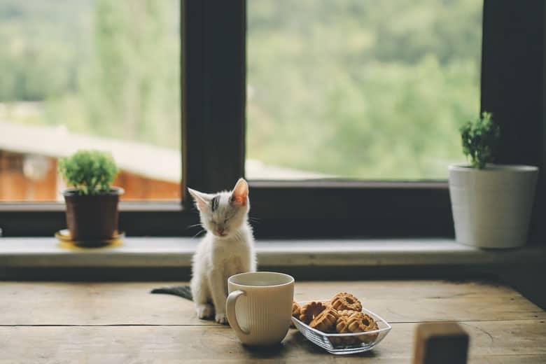 How do indoor cats get fleas yard