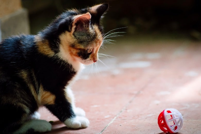 calico cat personality