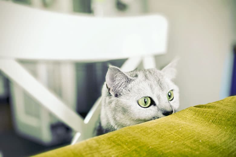 how to give a cat liquid medicine in food smells