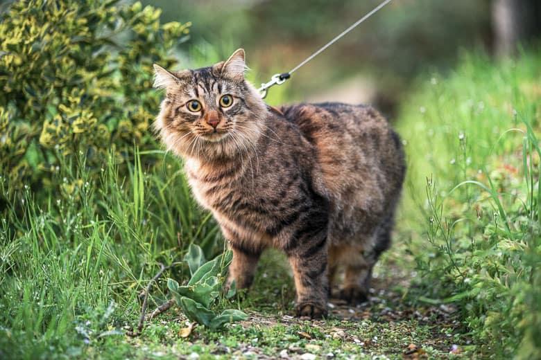 cat enrichment harness