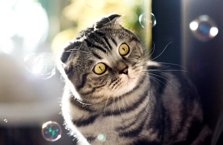 cat enrichment play