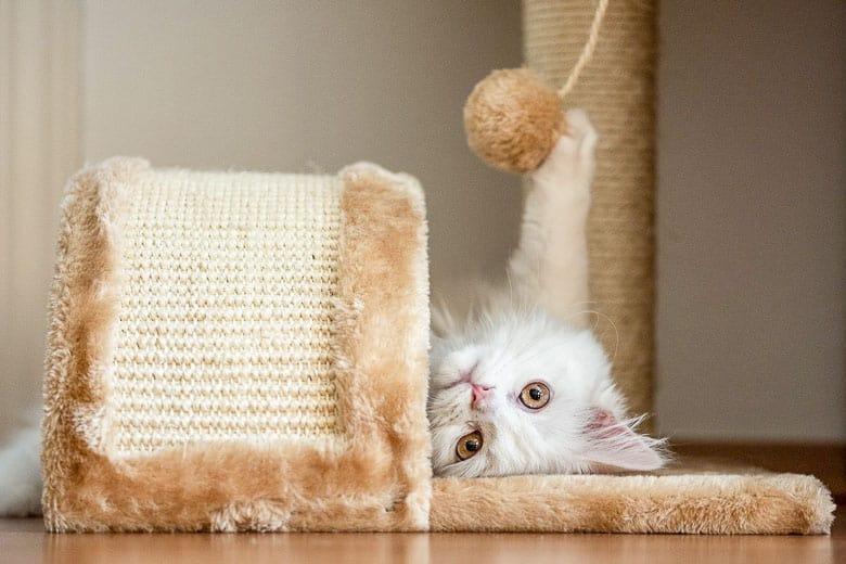 cat enrichment tree