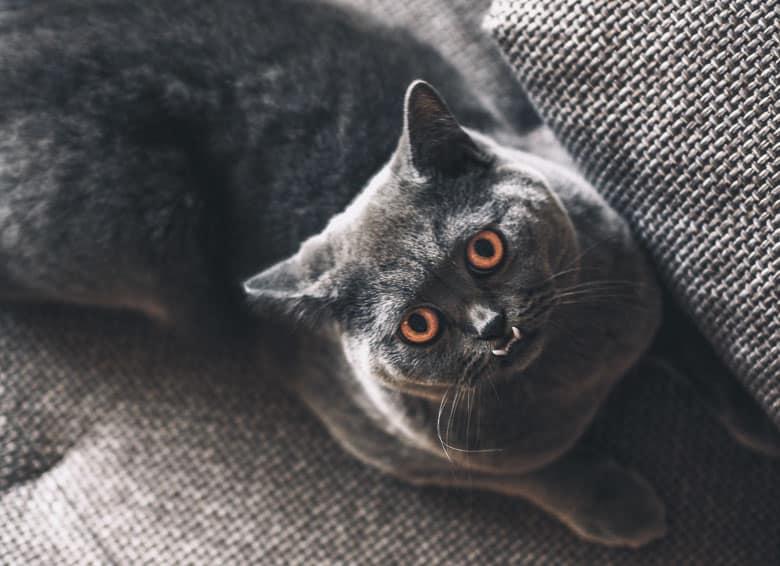 cat love bites overstimulation