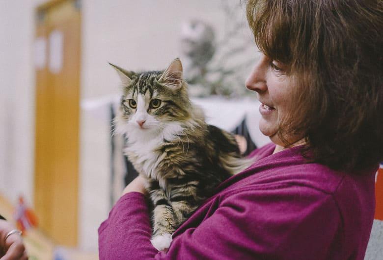 cat sitter introduction