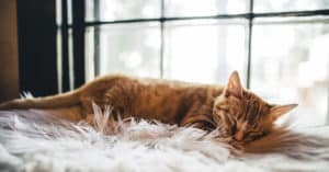 signs a cat is dying