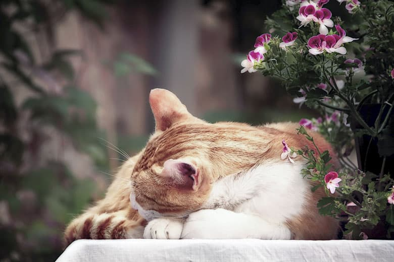 signs a cat is dying grief