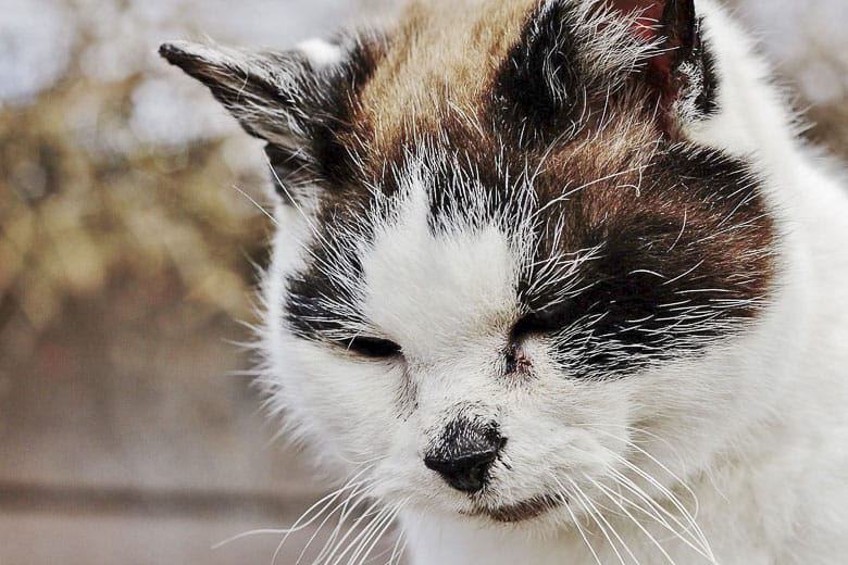 signs a cat is dying suffering