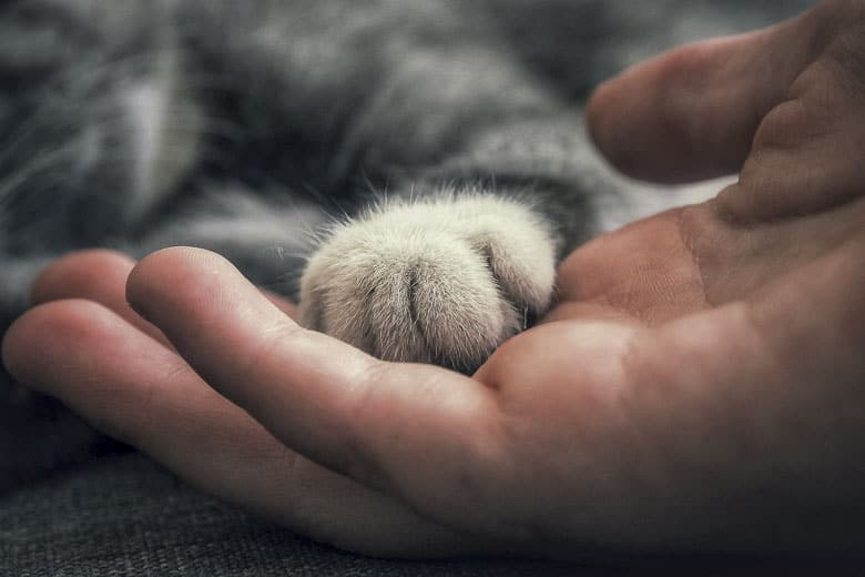 signs your cat is dying paws