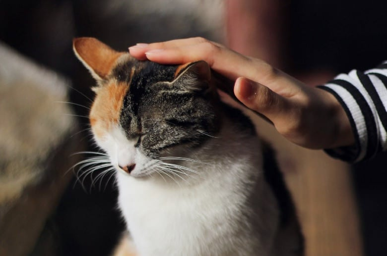 vegan cat