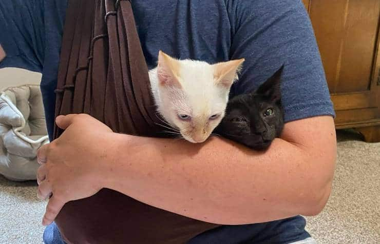 Two kittens in a cat sling
