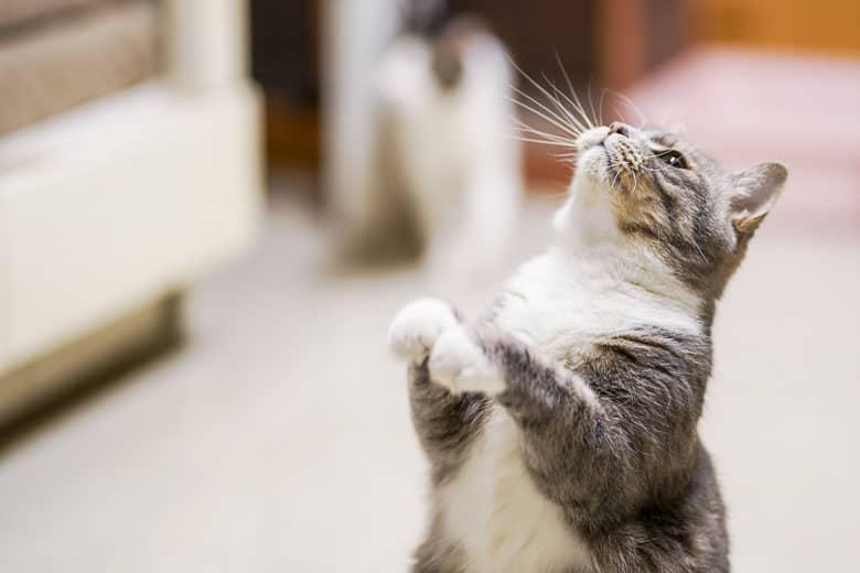 clicker training for cats method