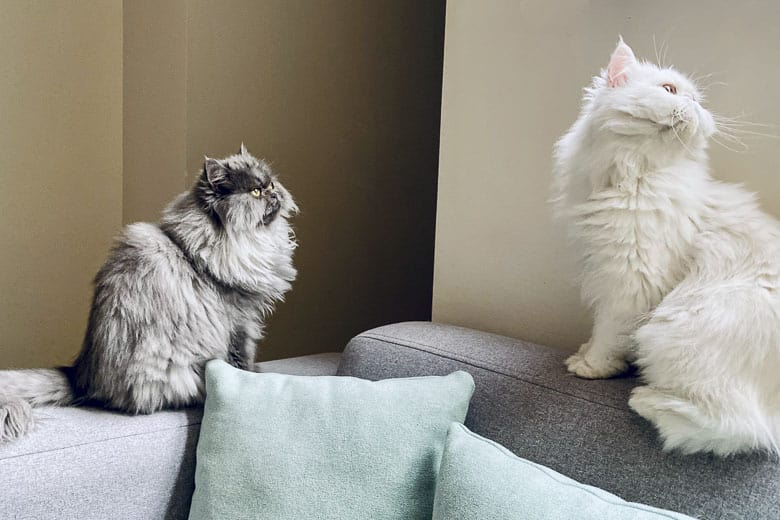 clicker training for cats multiple cats