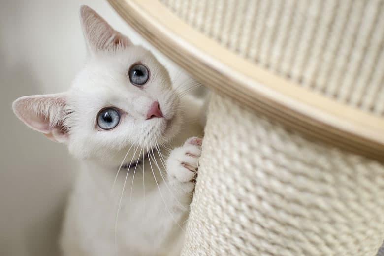 cat separation anxiety scratcher