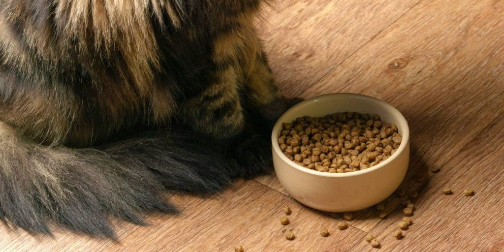 Dry cat food bad for cats?